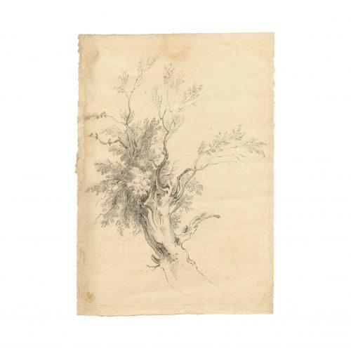 john constable tree drawing
