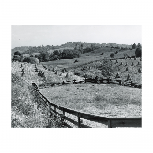 Marion Post Wolcott, 1910-1990- Untitled photo, possibly related to Cornshocks and fences on farm near Marion, Virginia - 1940 Oct. - Gelatin silver print photograph