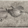"Justin Diggle, ""Invasive Aquatic Surveillance Bio-Drone (Genetically Enhance)"" - Etching, and Photo Etching"