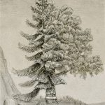 A drawing of two different families of trees tied together to make one