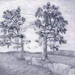 Image of two trees with tree houses on either side of a crack in the ground
