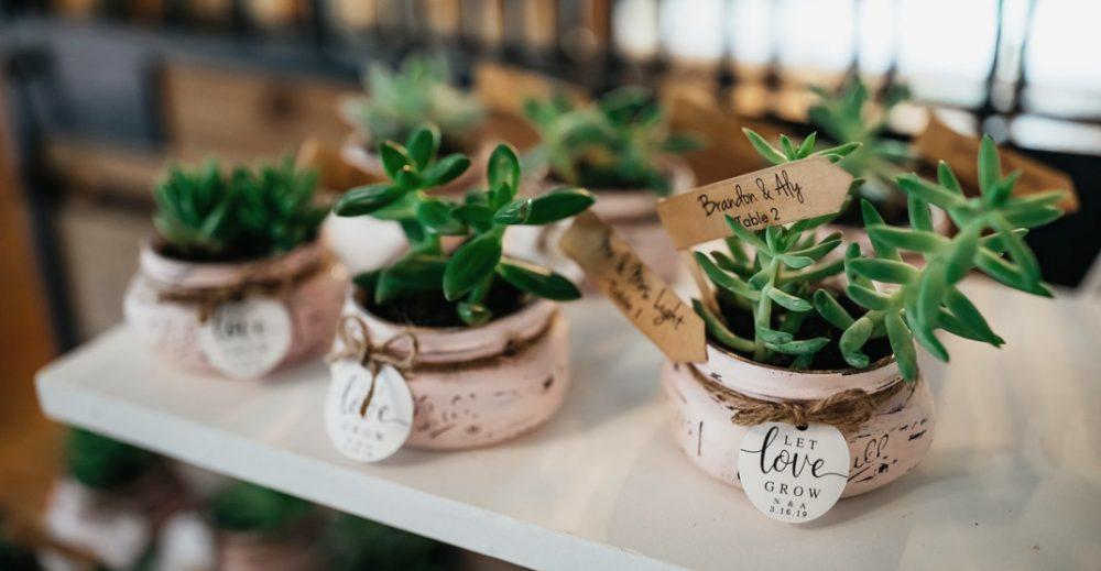 Des petites plantes à offrir aux invités de votre mariage sur le thème champêtre ou nature.