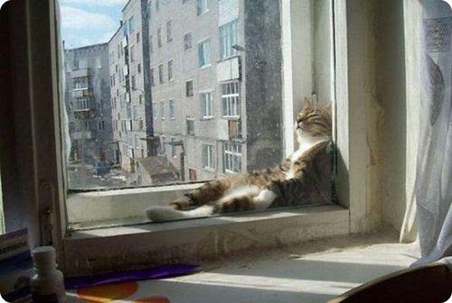 chat-fenetre