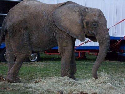 3120787_europe-elephant-samba-dec11-new