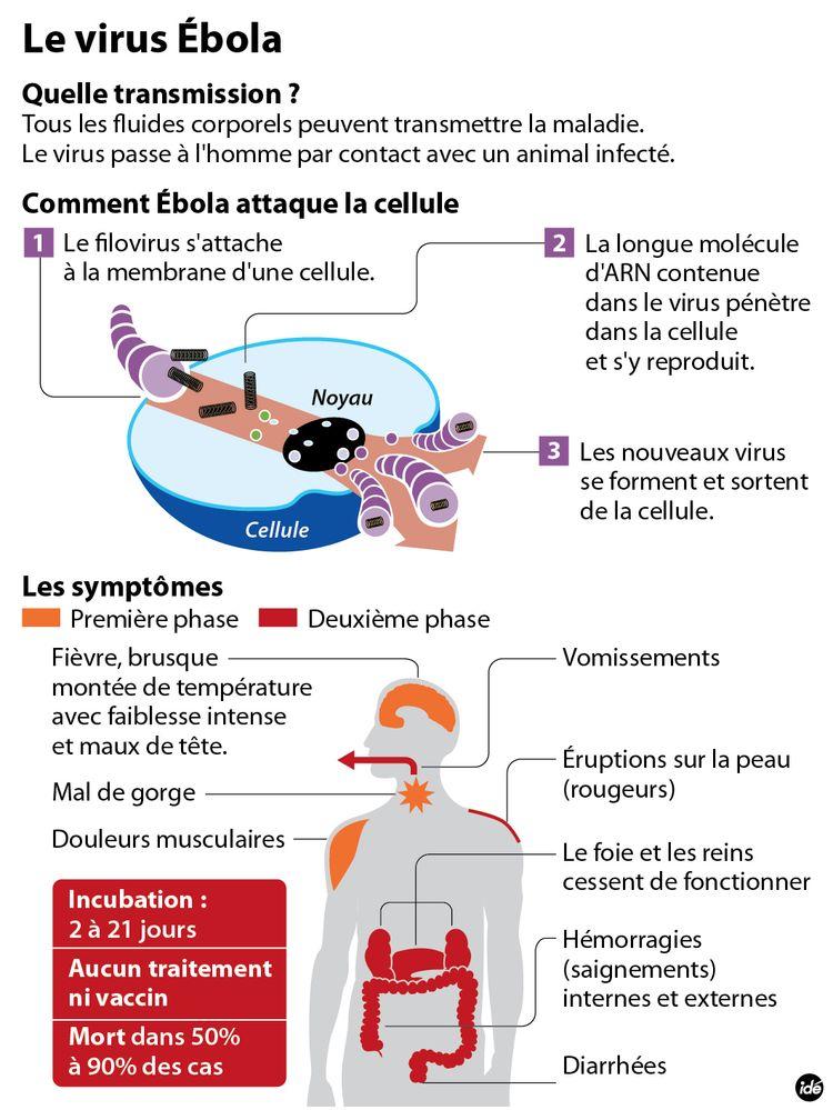 630758-virus_ebola