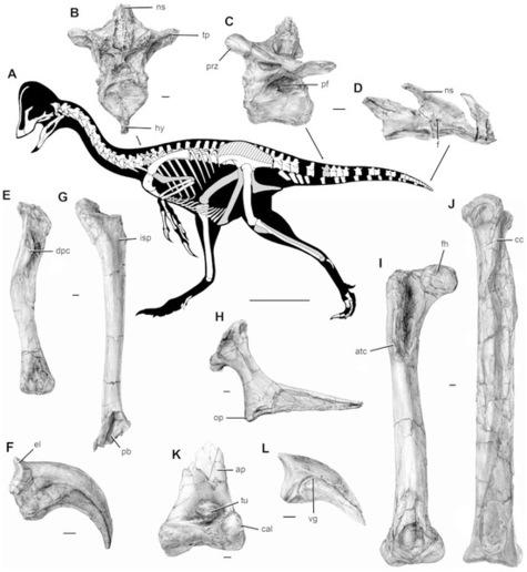 Un-dinosaure-a-plumes-aux-allures-de-poulet-geant_article_main