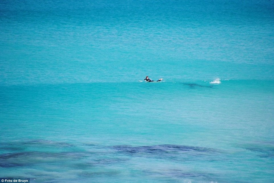 andy_Johnston_requin02