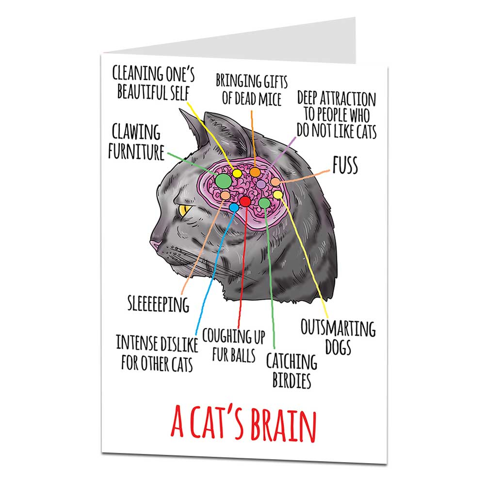 Cat's Brain Birthday Card