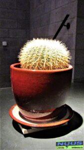 Cactus mascotte 't Spelleke van Lierde