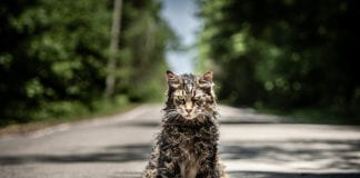pet sematary cat