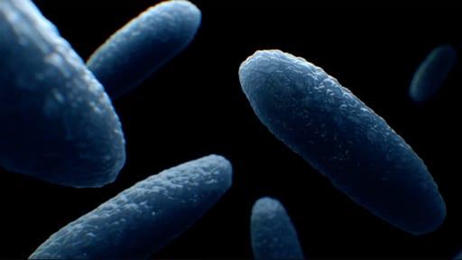 human nature bacteria