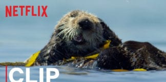 Our Planet   Otters   Clip   Netflix