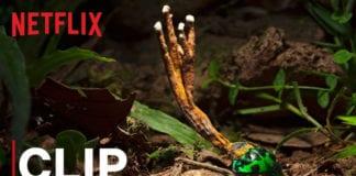 Our Planet   Fungus   Clip   Netflix