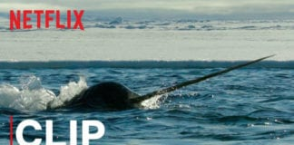Our Planet   Narwhals   Clip   Netflix