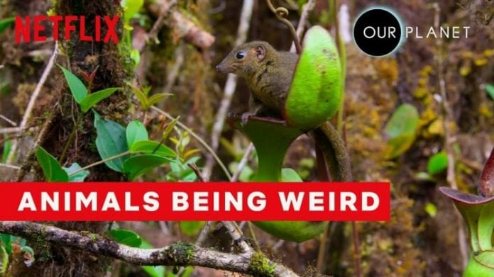 Weirdest Animal Behavior | Our Planet | Netflix