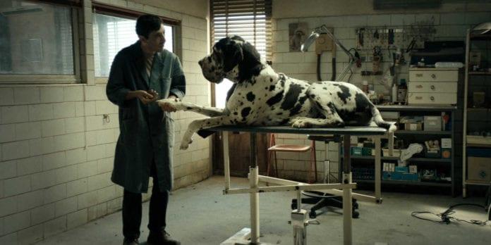 dogman groomer