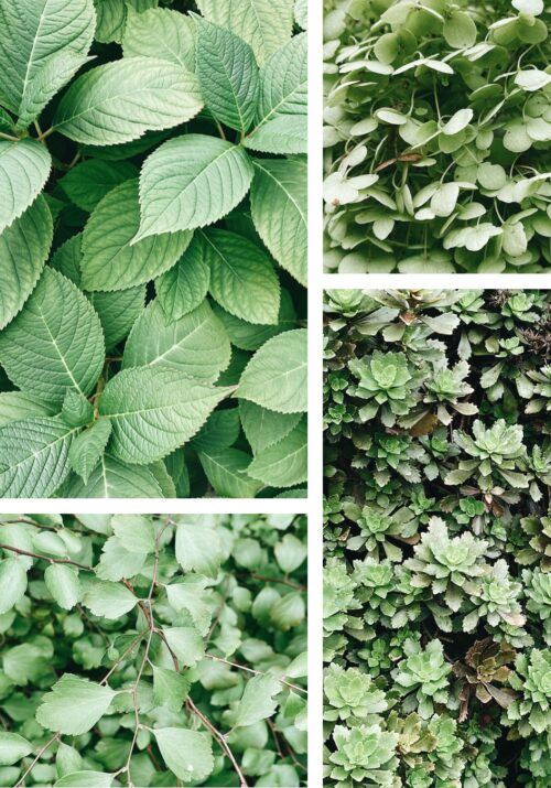 LEAFY GREENS TO BRING LIFE TO YOUR SCREENS