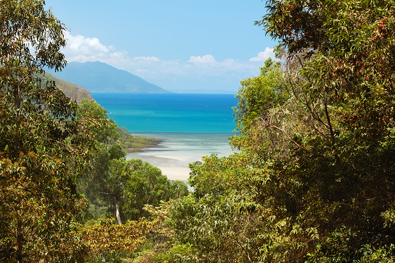 The Daintree National Park, Queensland/Australia. View towards Cape Tribulation and the Stingray Beach.