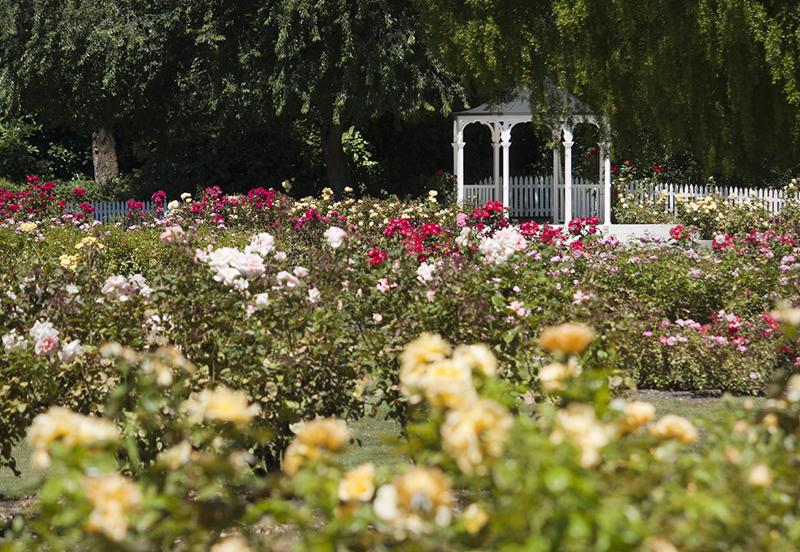 Gazebo, Palmerston North Esplanade Rose Gardens