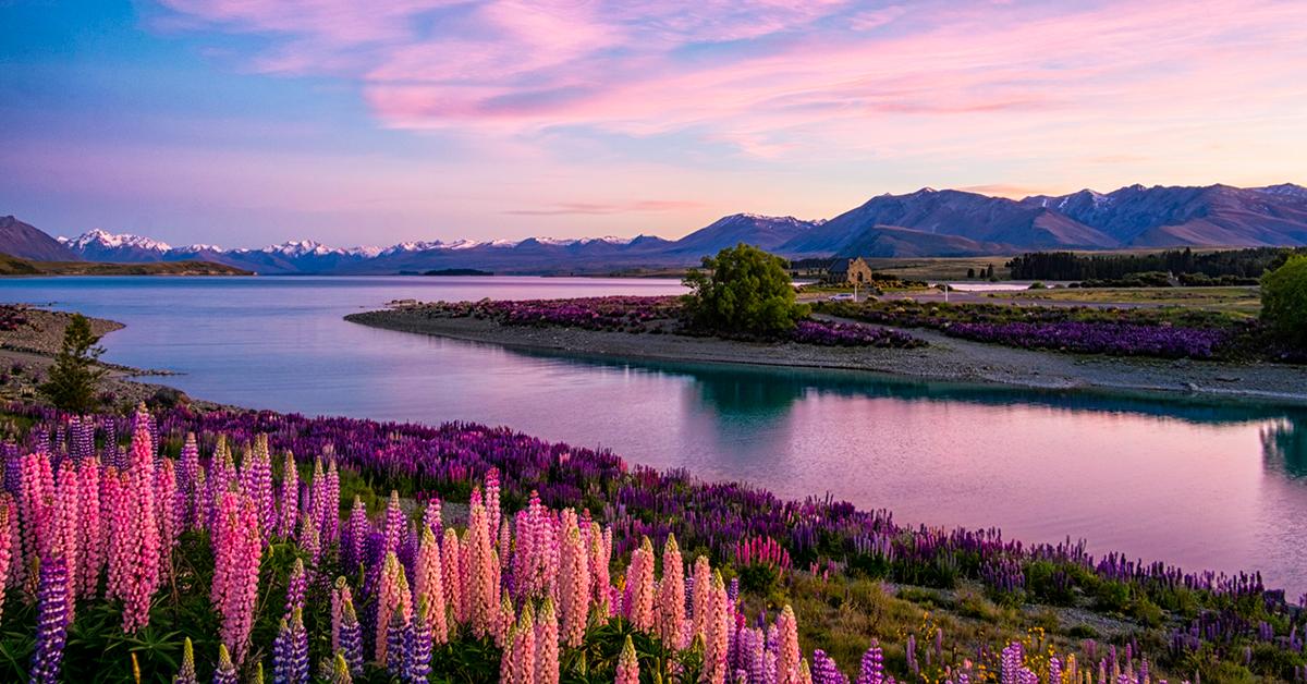 Lake Tekapo At Dawn, New Zealand South Island