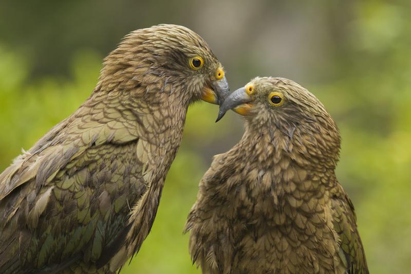 New Zealand animal getaways