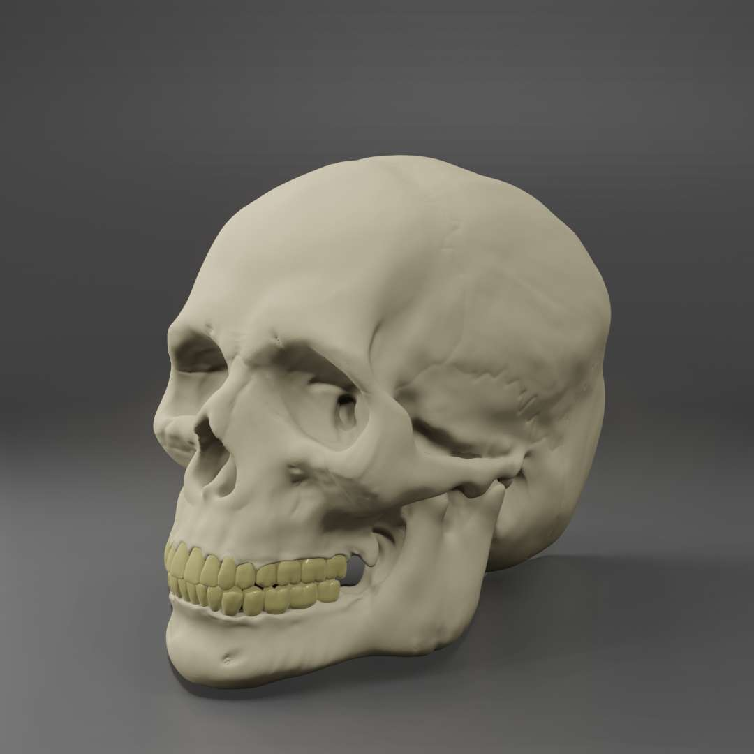 Anatomic Male Skull  - Realistic and very detailfull model of male human Skull, aproximate Dimensios of 140mm x 150mm.  Observation: Only one object - The best files for 3D printing in the world. Stl models divided into parts to facilitate 3D printing. All kinds of characters, decoration, cosplay, prosthetics, pieces. Quality in 3D printing. Affordable 3D models. Low cost. Collective purchases of 3D files.