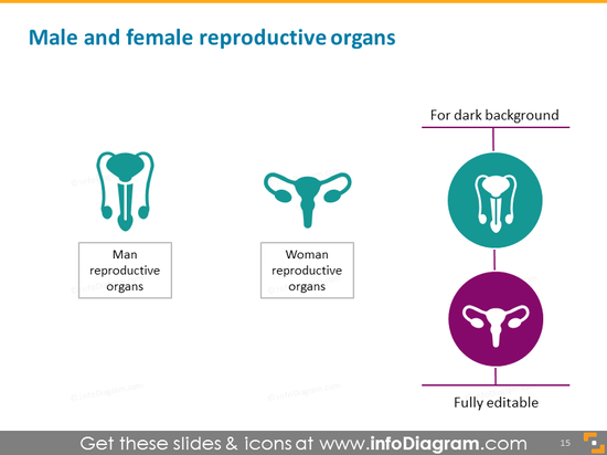 Male and Female Reproductive Organs