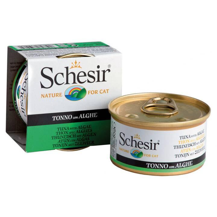 SCHESIR Nassfutter (Adult, Thunfisch)