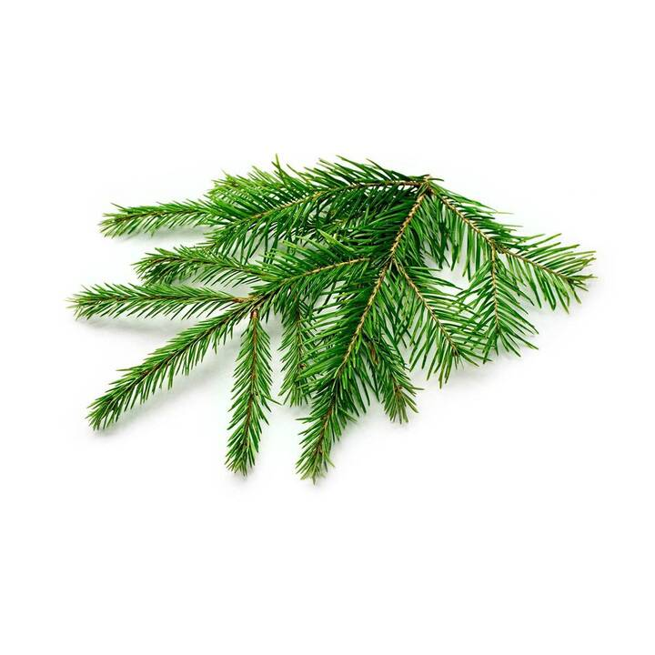 CLICK AND GROW Spruce (3 pièce)