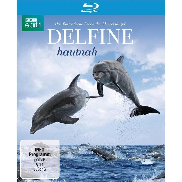 Delfine hautnah (DE, EN)