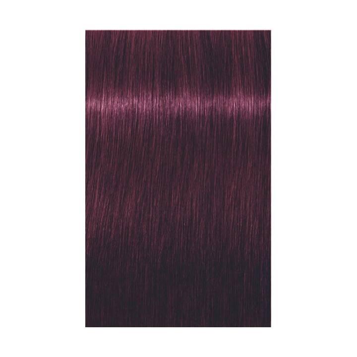 SCHWARZKOPF Igora Royal (6.99, Dark Blonde Violet Extra)