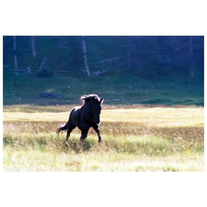 Das Geheimnis des wilden Mustangs (EN, DE)