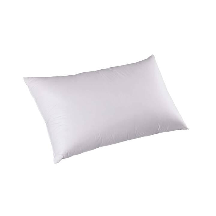 DOR Gaura Premium Cuscino (65 cm x 100 cm, Bianco)