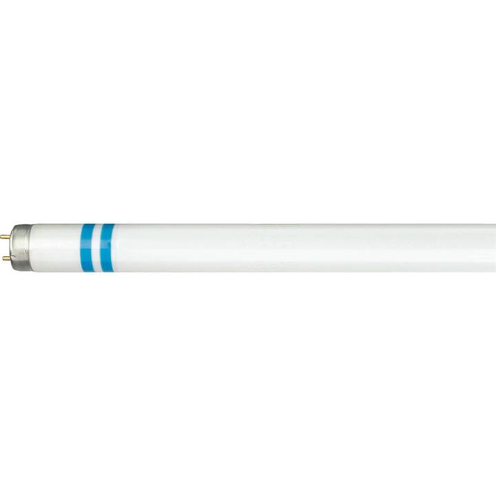 PHILIPS Master TL-D  Lampes (Lampe fluorescent, G13, 36 W)