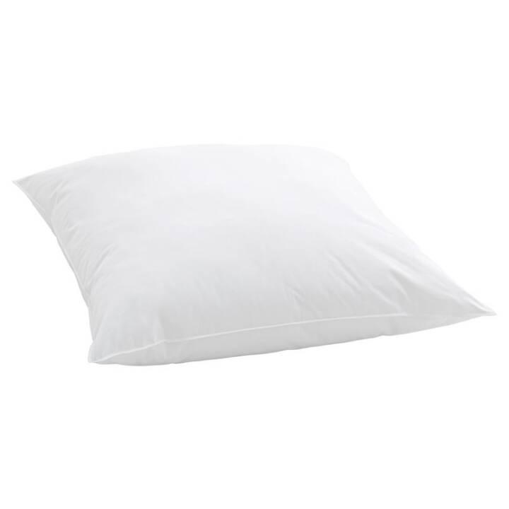 BILLERBECK Softy Coussin (100 cm x 65 cm, Blanc)