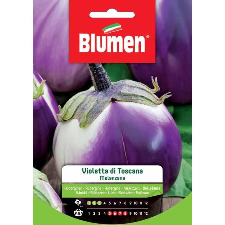 BLUMEN Aubergine Violetta di Firenze (4 g)
