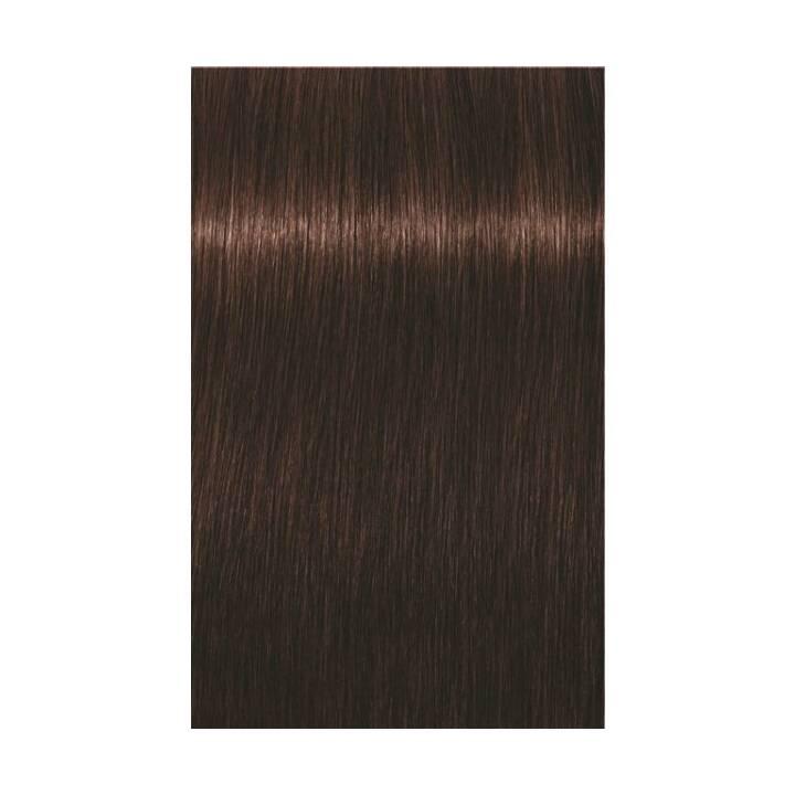 SCHWARZKOPF Igora Royal (4.68, Medium Brown Chocolate Red)