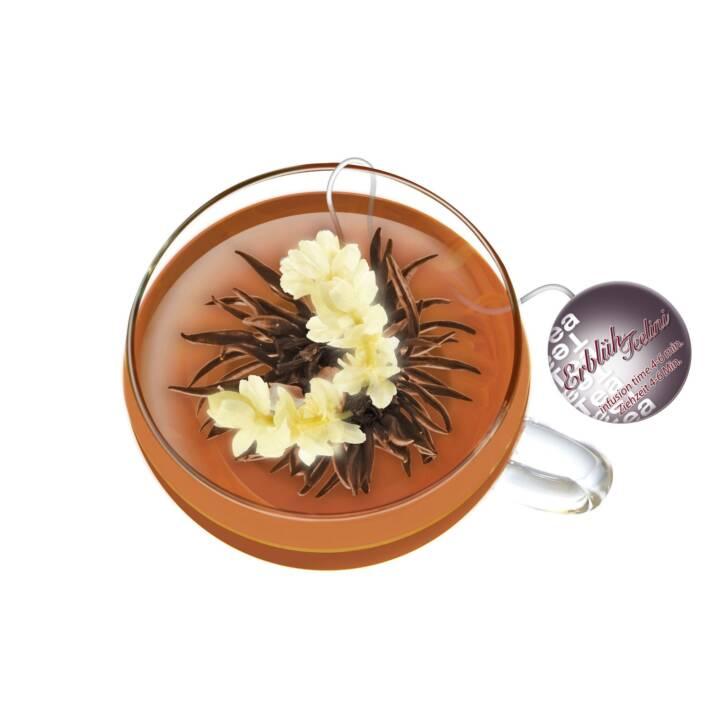 CREANO Erblüh Thé noir (Fleur du thé, 12 pièce)