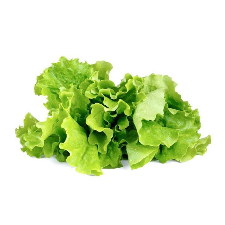 CLICK AND GROW Salade