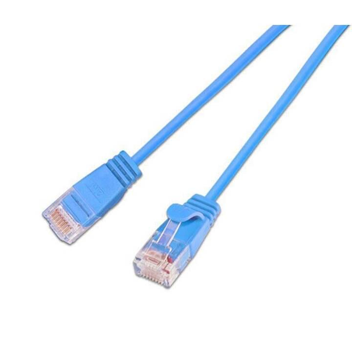 WIREWIN Câble réseau (Fiche RJ-45, 50 cm)