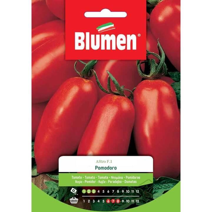 BLUMEN Tomate Astro F.1