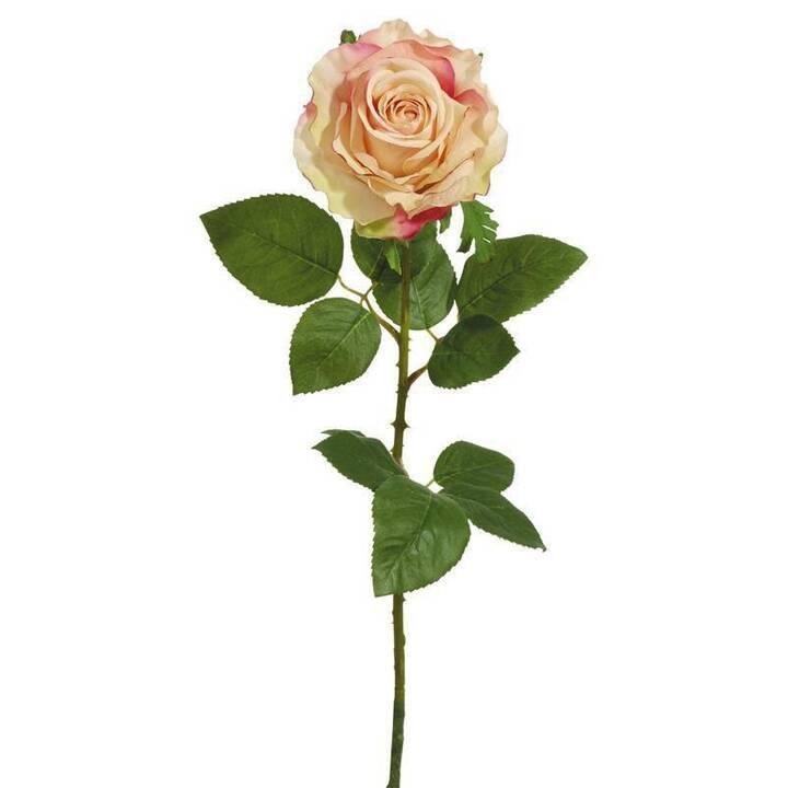 BOTANIC-HAUS Pianta artificiale Rose (Rosa, Bianco)