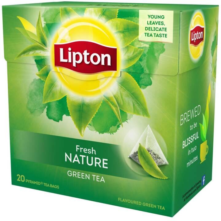 LIPTON Fresh Nature Tè verde (Bustina di tè, 20 pezzo)