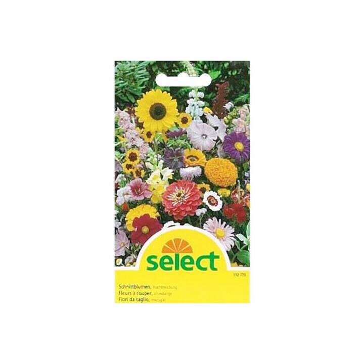 SELECT Schnittblumen