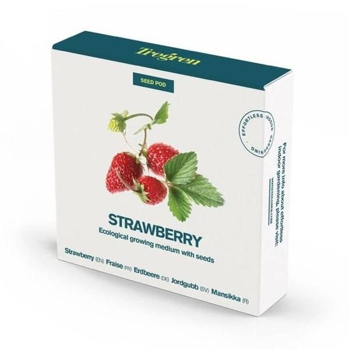 TREGREN Fraise Strawberry Seed pots