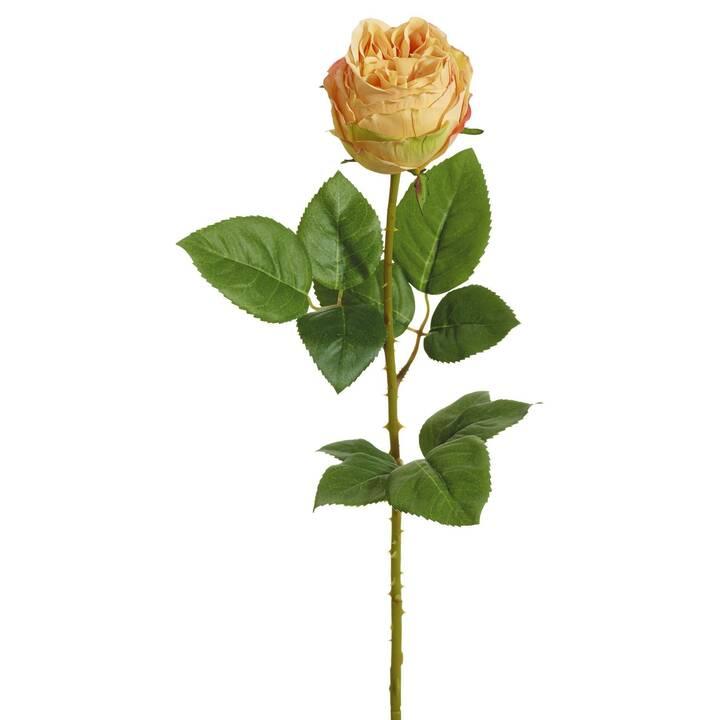 BOTANIC-HAUS Kunstpflanze Rose (Orange, Grün, Gelb)