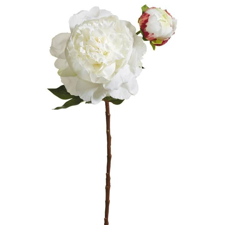 BOTANIC-HAUS Pianta artificiale (Bianco)