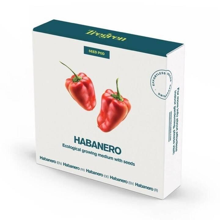 Tregren Habanero Seed pots