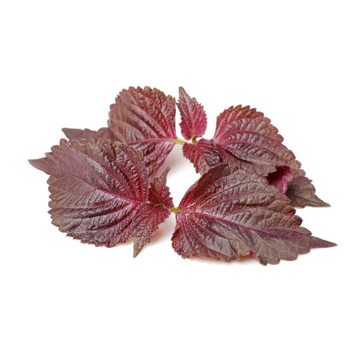 CLICK AND GROW Shiso rouge (3 pièce)