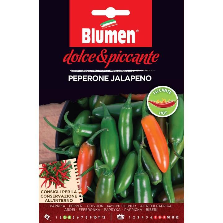 BLUMEN Peperoncino Jalapeno